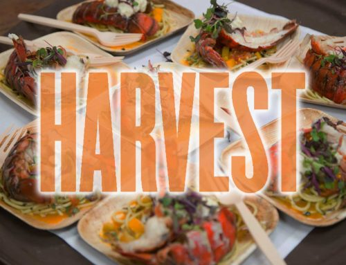 13 Reasons to Go to Harvest on the Harbor Festival